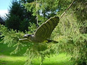 Schöne Gartendeko, adler fliegend xxl 68cm schöne gartendeko balkon taubenschreck, Design ideen