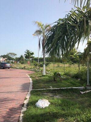 Terreno en venta en Buenavista en Ciudad del Carmen, Campeche