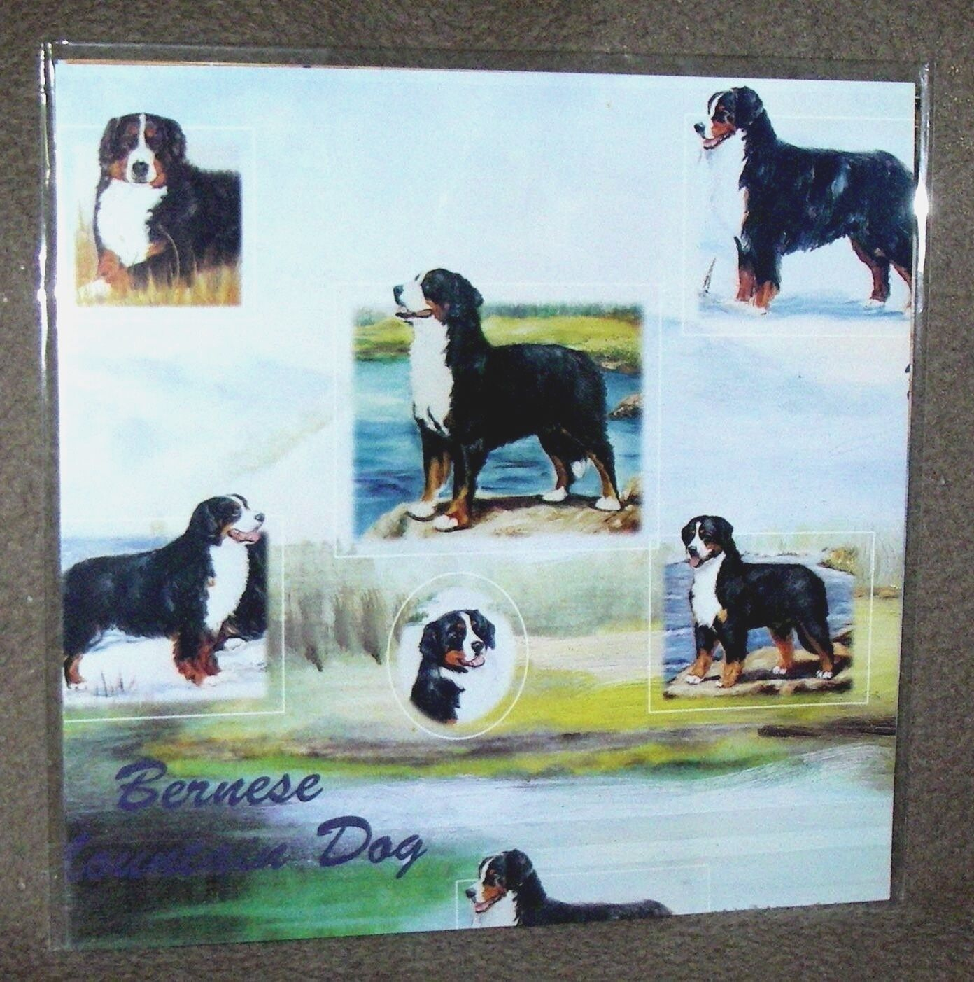 ROTTWEILER Gift Wrapping Paper w//matching Gift Card by Maystead