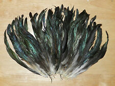 50 Fuchsia COQUE Rooster Tail Feathers 8 to 10 Inches