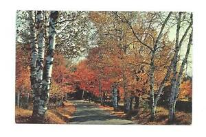 HAINES-FALLS-NY-Greeting-Postcard-Fall-Autumn-Foliage