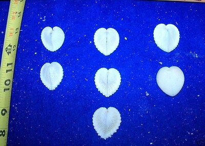 20 SMALL HEART COCKLE SEASHELLS Wedding CRAFTS Beach decor SMHRTSS-20