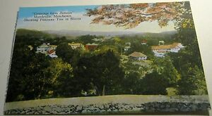 Jamaica-Mandeville-Manchester-Panceana-Tree-in-Bloom-unposted