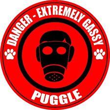 Danger Gassy Puggle Fart Dog Sticker
