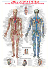Art Human Anatomy Interactive Body Wall Chart 30 24x36in Poster Hot Gift C1257