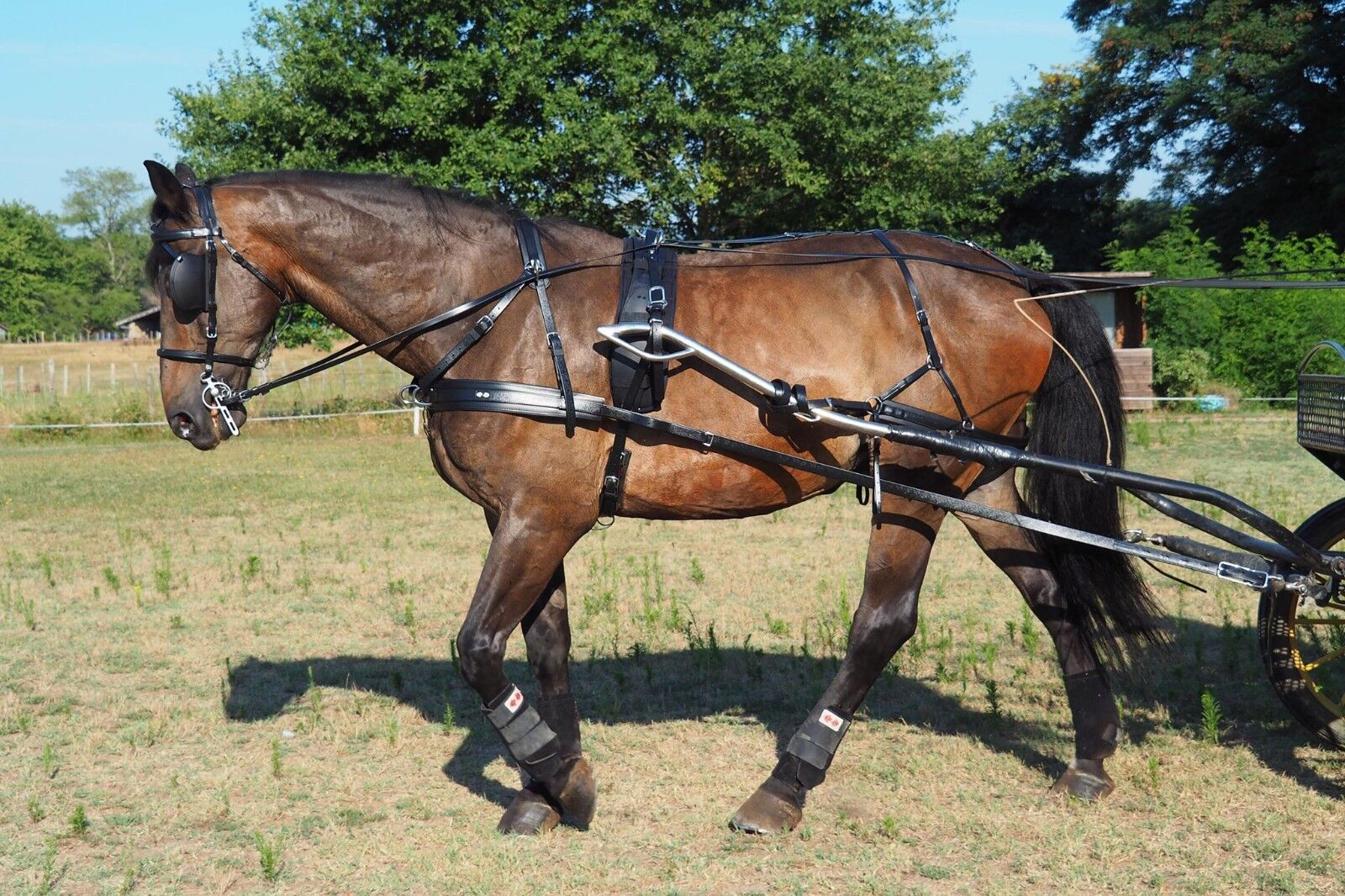 Zilco Sl Plus  Harness PAIR pony cob and full sizes avaliable  incentive promotionals