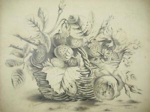 Pauline-Reissmann-1884-Drawing-Original-Pencil-Still-Life-Un-Frasier-Strawberry