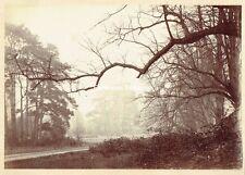 Brooding, atmospheric 1880s Woodland Albumen Photograph