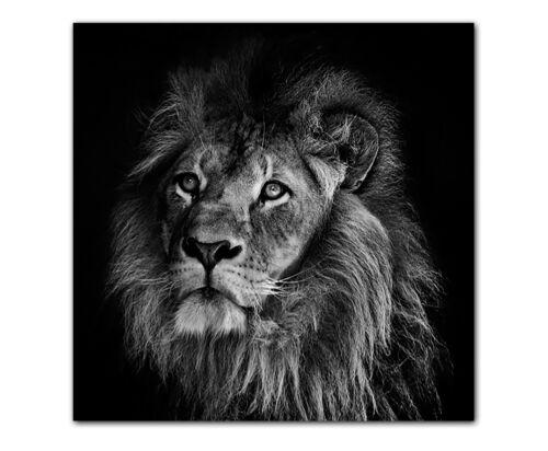 weiß gerahmt XXL Löwe Raubkatze Bild auf Leinwand Druck Deko Wandbild schwarz