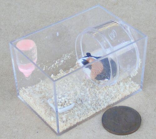 1:12 scale Guinea Pig dans un Plastique vitrine tumdee maison de poupées miniature Pet