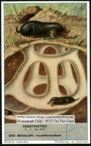 European-Mole-NICE-60-Y-O-Trade-Ad-Card