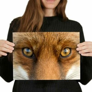 A4-Beautiful-Fox-Eyes-Wild-Animal-Nature-Poster-29-7X21cm280gsm-8115
