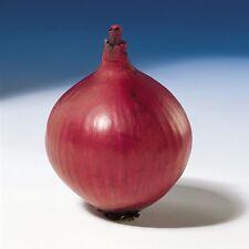 Onion - Red Baron - 250 Seeds