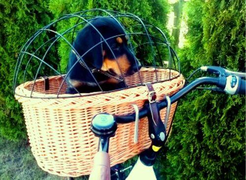 XXL Hundefahrradkorb Hundekorb vorne Hundeanhänger 60 cm mit Gitter Weide Kissen