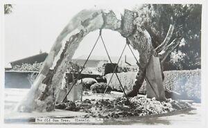 VINTAGE-SANDEMAN-039-S-REAL-PHOTO-POSTCARD-THE-OLD-GUM-TREE-GLENELG-S-A