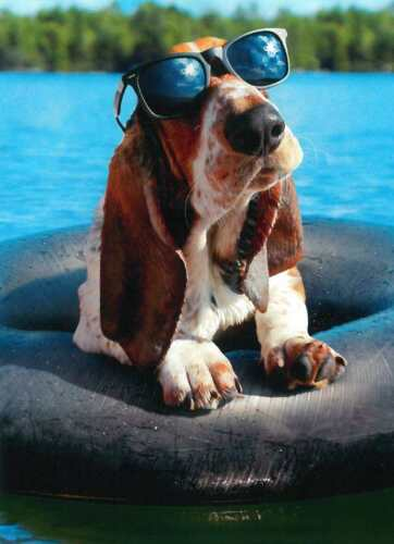 Avanti greeting card birthday dog lake funny