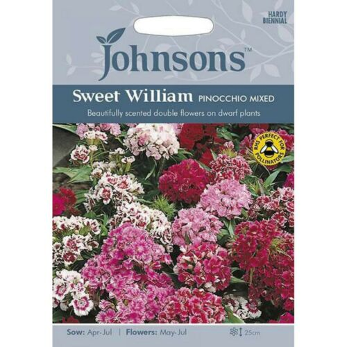 Sweet William Seeds /'Pinocchio Mixed/' by Johnsons Approx 500 Seeds Per Pack