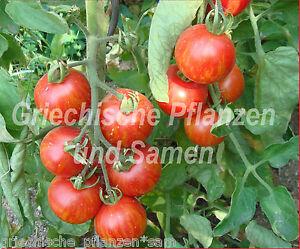 Tigerella-gestreifte-Tomate-frueh-reifend-Tomaten-10-frische-Samen-Balkon