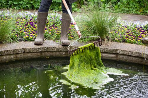 ; Elimine les Blanket Weed 100 g Aqua-Tonic Poisson Bassin algicide