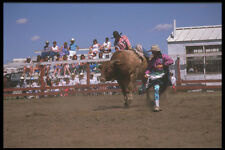 331085 Bull Riding A4 Photo Print