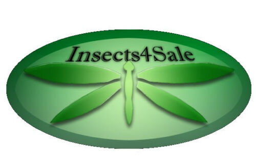Insect Mounting Pins size 00