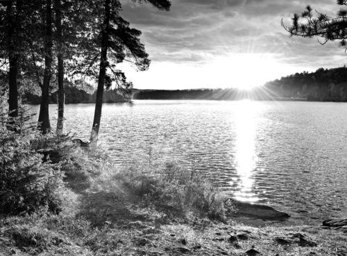 VLIES Fototapete-SEE- -Schwarz-Weiß Natur Wald Bäume Fluss Kunst Wandbild 1557V