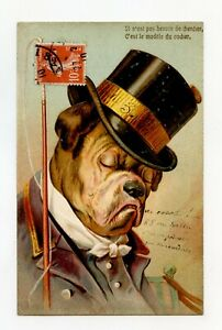 Illustrator-without-Signature-Dog-Habille-the-Bulldog-the-Coachman