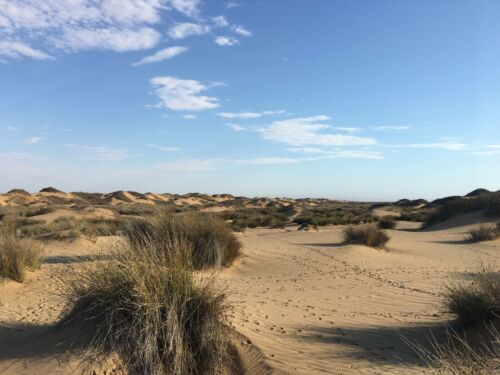 Acanthosicyos Horridus Endemic to Namibia Edible desert plant 5 Seeds !NARA