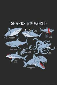 Sharks of the World Funny Poster 24x36 inch