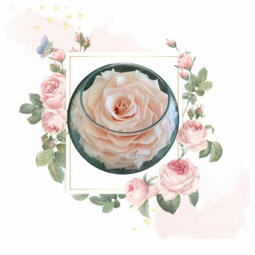 Premium Eternal Roses Preserved Rose