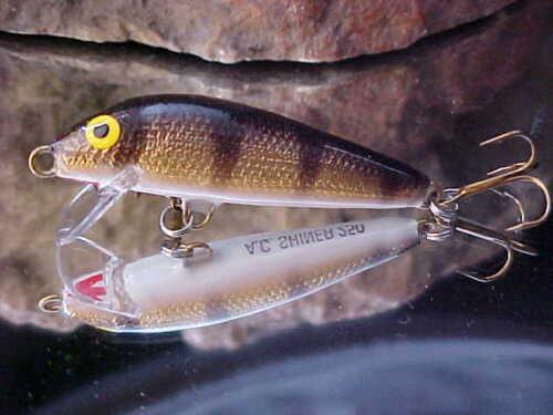"/""Bass//Trout//Perch AC Shiner 2 1//2/"" Wood Shallow Running Minnow 250-GOLD PERCH"