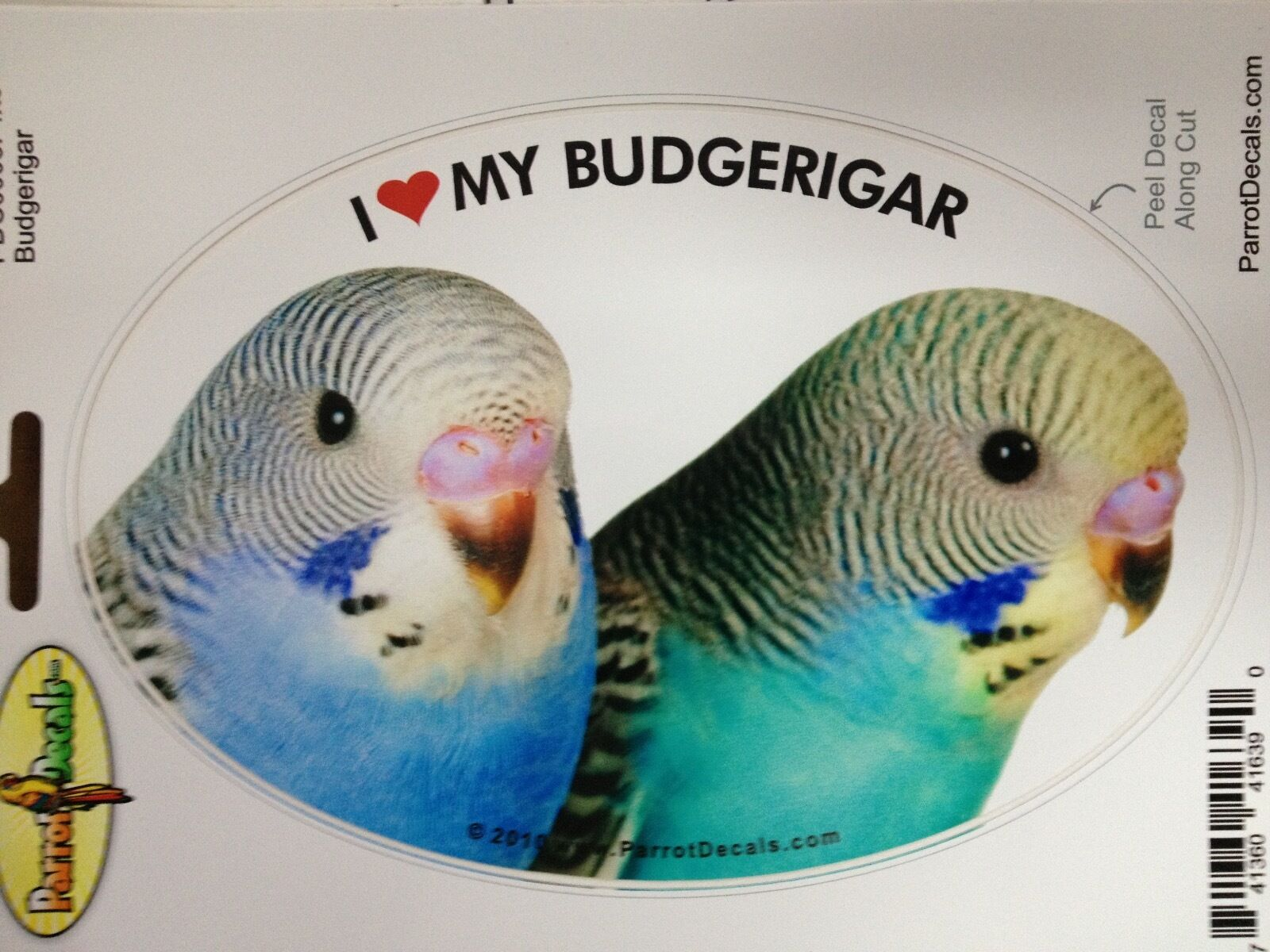 Female Eclectus Parrot Exotic Bird Vinyl Decal Bumper Sticker