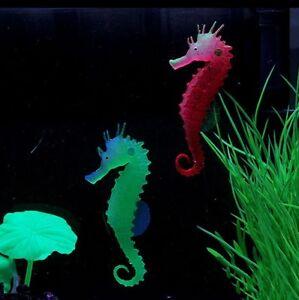 seepferdchen im aquarium