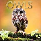 Cal 2017 Owls by TF Publishing