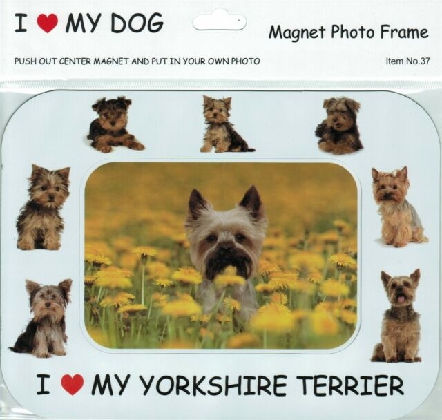 Yorkshire Terrier Dog Motif 6 x 4 Photo Picture Frame