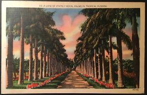 Lane-of-Stately-Royal-Palms-Tropical-FL-Vintage-Postcard-1941-Postmark-E120