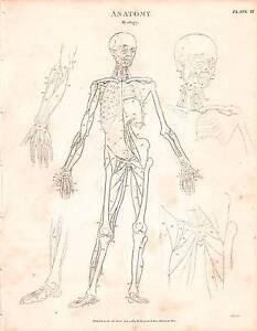 1803 DATED PRINT ANATOMY ~ MYOLOGY ~ DIAGRAM MUSCLES SKELETON FIGURE ARM LEG