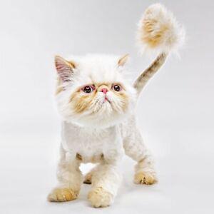 Image Is Loading Cute Grumpy Cat Kitten High Quality Blank Birthday