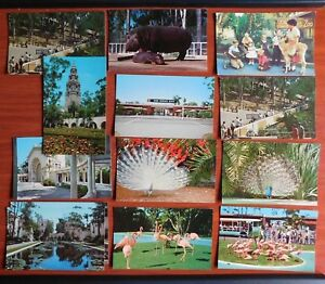 13-Postcards-San-Diego-Zoo-California-Children-039-s-Flamingo-Hippo-Peacock