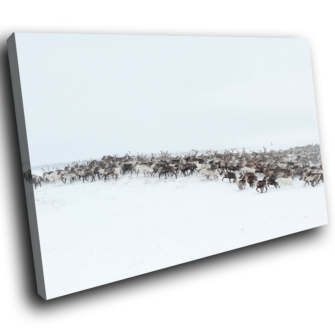 A598 Deer Herd Snow Winter  Funky Animal Canvas Wall Art Large Picture Prints