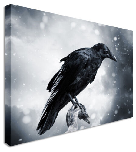 Animal Watching Crow  Canvas Wall Art Picture Print