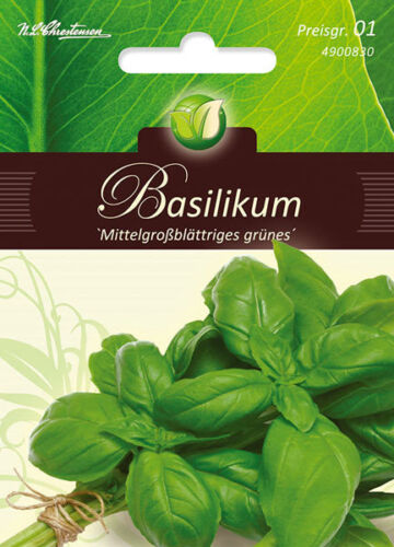 Chrestensen mittelgrossesblättrig pg1 erbe verde Il basilico Ocimum basilicum