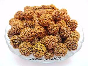 Natural 5 Mukhi Rudraksha / Five Facet Rudraksh - Nepali 101 Beads lot -18-20mm