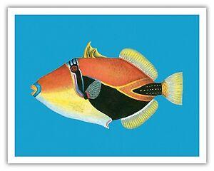 Humuhumunukunukuapua A Hawaii State Fish Aloha Vintage Art