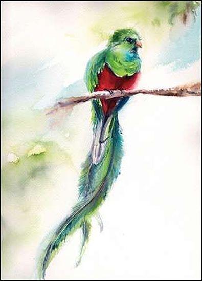 Sophia Rodionov  Exotic Keilrahmen-Bild Leinwand Papagei Vögel grün bunt modern