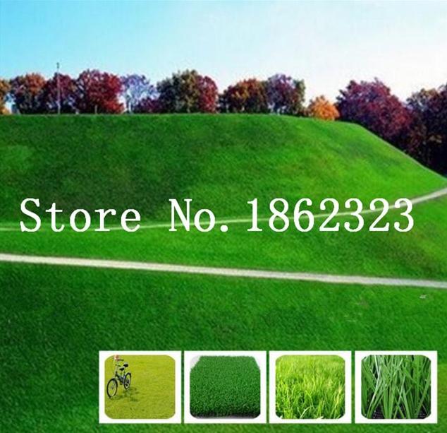 1000 Pcs Pack Seeds Green Source Turfgrass Grass Bonsais Evergreen Lawn Bonsai S