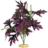Blue Ribbon Colorburst Plant Amazon Butterfly Leaf W/ Buds Free Shipping