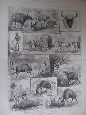La CACCIA gaour o INDIAN BISON 1887 old print India