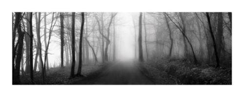 Woodland Walk by Erin Clark Fog Trees 40x16 Poster LANDSCAPE PHOTO ART PRINT