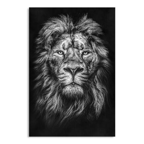 LEINWAND BILD XXL LÖWE LION NATUR DEKO WANDBILDER KUNSTDRUCK TIERBILDER KATZE SW